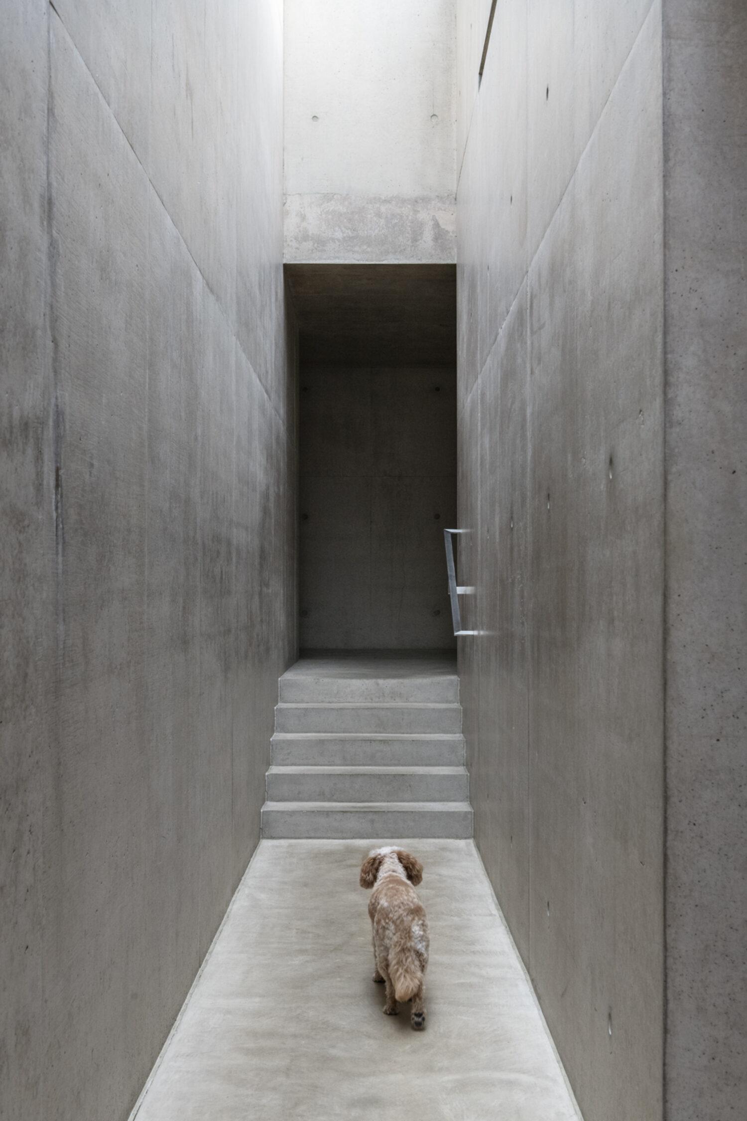 Resident Dog book 2